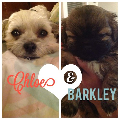 Barkley and Chloe